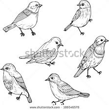 birds stock images royalty free images u0026 vectors