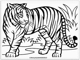 tiger drawing for children how to draw a tiger cub youtube