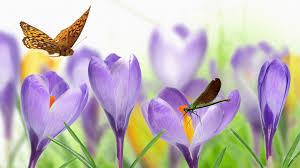 flower crocus dragonfly butterfly flowers firefox persona grass