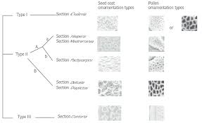 seed and pollen ornamentation types observed in the sections of