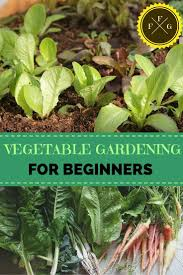 Gardening For Beginners Vegetables by 101 Best Vegetable Gardening Diy Images On Pinterest Gardening