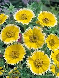 480 best garden plants flowers u0026 how to u0027s images on pinterest