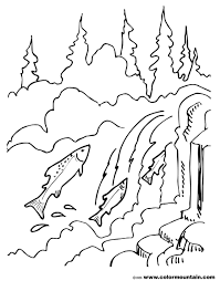 salmon fish coloring page salmon coloring sheet create a printout or activity
