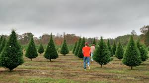 angie kay dilmore grant christmas tree farm