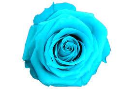 turquoise flowers colours iluba longlife fresh flowers