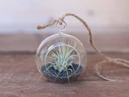 hanging air plant terrariums air plant design studio