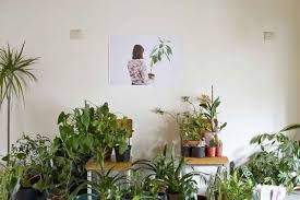 What Plants Are Cubicle Friendly by Mother In Law Plant Shade Loving Houseplants Pinterest