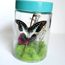 shop taxidermy insects on wanelo
