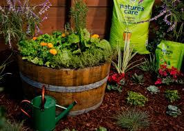 plant an organic whiskey barrel garden garden club