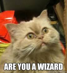 Are You A Wizard Meme - are you a wizard wizard cat quickmeme