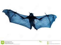 creepy blue nighttime flying halloween bat isolated on white