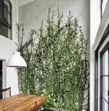 indoor vine plant 5 gorgeous indoor vines to grow in your home