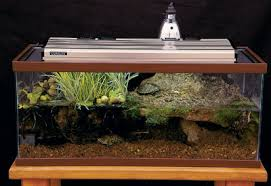 reptile enclosures and set ups