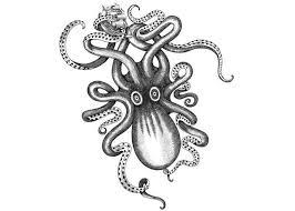 83 besten octopus bilder auf pinterest leinwanddrucke drawing