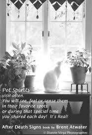 coping with loss of pet cat loss quote greiving cat loss inspirational cat