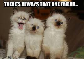 Happy Kitten Meme - funny angry grumpy cat memes collection for friends family