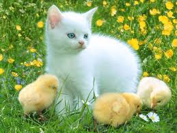 166 best meow images on pinterest animals adorable animals