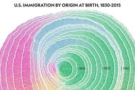 tree rings pictures images See 200 years of immigration in the united states as a graphic of jpg