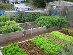 catchy gardening in raised beds for vegetables in interior