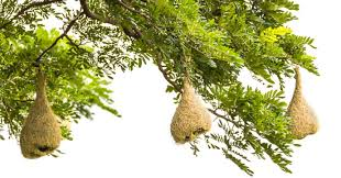 Cacoon Cacoon Australia Just Hang Your Nest