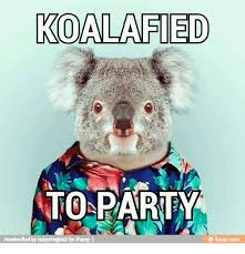 Funny Party Memes - 25 best memes about koalafied to party koalafied to party memes