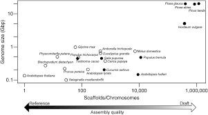 insights into conifer giga genomes plant physiology