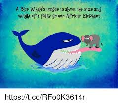 Whaling Meme - 25 best memes about blue whale tongue blue whale tongue memes