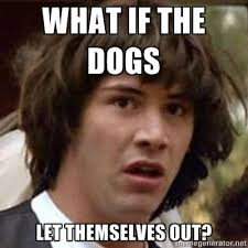 Who Let The Dogs Out Meme - conspiracy keanu meme who let the dogs out humour pinterest