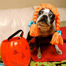 english bulldog halloween costumes dogs in halloween costumes u2013 festival collections