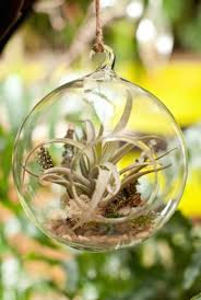 50 magical terrarium ideas to install in your home buzz 2017