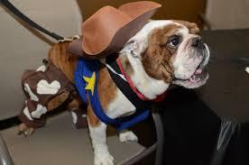 ppm u0027s top 5 dog halloween costumes u2014 ppm apartments blog
