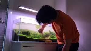 membuat aquascape bening aquascape pensiunan pci cilegon hot clip new video funny