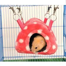 Hamster Bed Hamsters U2013 Pet Clever