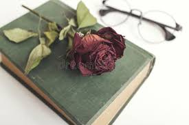 dried roses book with beautiful dried roses stock image image of