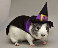Animal Halloween Costumes 25 Halloween Costumes Guys Ideas Guy