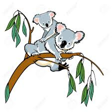 koala bear stock photos royalty free koala bear images and pictures