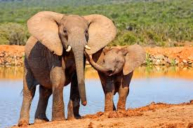 elephant meaning