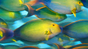 live fish wallpaper for ipad 1920 1080 hd for ipad apps