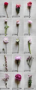 wedding flowers guide names of wedding flowers wedding corners
