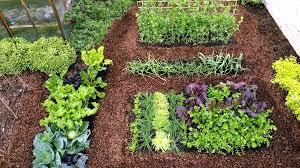 Garden Layouts For Vegetables Vegetable Garden Layout Home Vegetable Garden Design Unthinkable