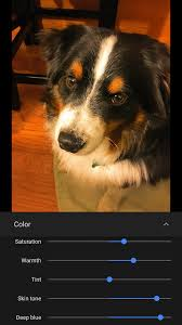 australian shepherd ipod 5 case 26 insanely useful iphone tips that you may not know about