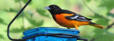 photos backyard birding bringing wild birds to your backyard