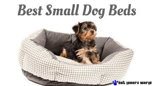 Puppy Beds What Are The Best Dog Beds For Small Dogs Pet Lovers World