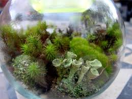 small beauty in large terrarium my journey