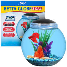 Betta Fish Decorations Betta Clipart Bowl Pencil And In Color Betta Clipart Bowl