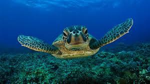 giant sea turtles u2022 coral reef fish u2022 3 hours u2022 best relax