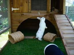 Rabbit Hutch With Large Run Giant Rabbit Hutch Chicken Coop U0026 Houses Custom Sheds Cat