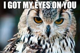 I Got My Eyes On You Meme - image tagged in owl imgflip