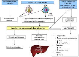 Map Sensor Symptoms Ijms Free Full Text Molecular Mechanisms Of Liver Fibrosis In