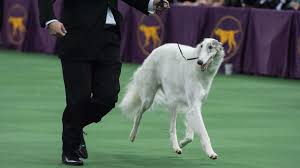lexus service westminster the westminster dog show is now going to include cats 11alive com